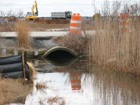 In 2008, the Reserve removed two under sized culverts to restore tidal flow at South Cape Beach.
