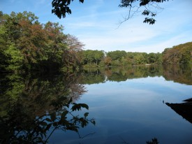 11-acre coastal pond parcel recently added to the Reserve's property.