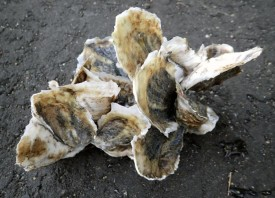 OysterCluster