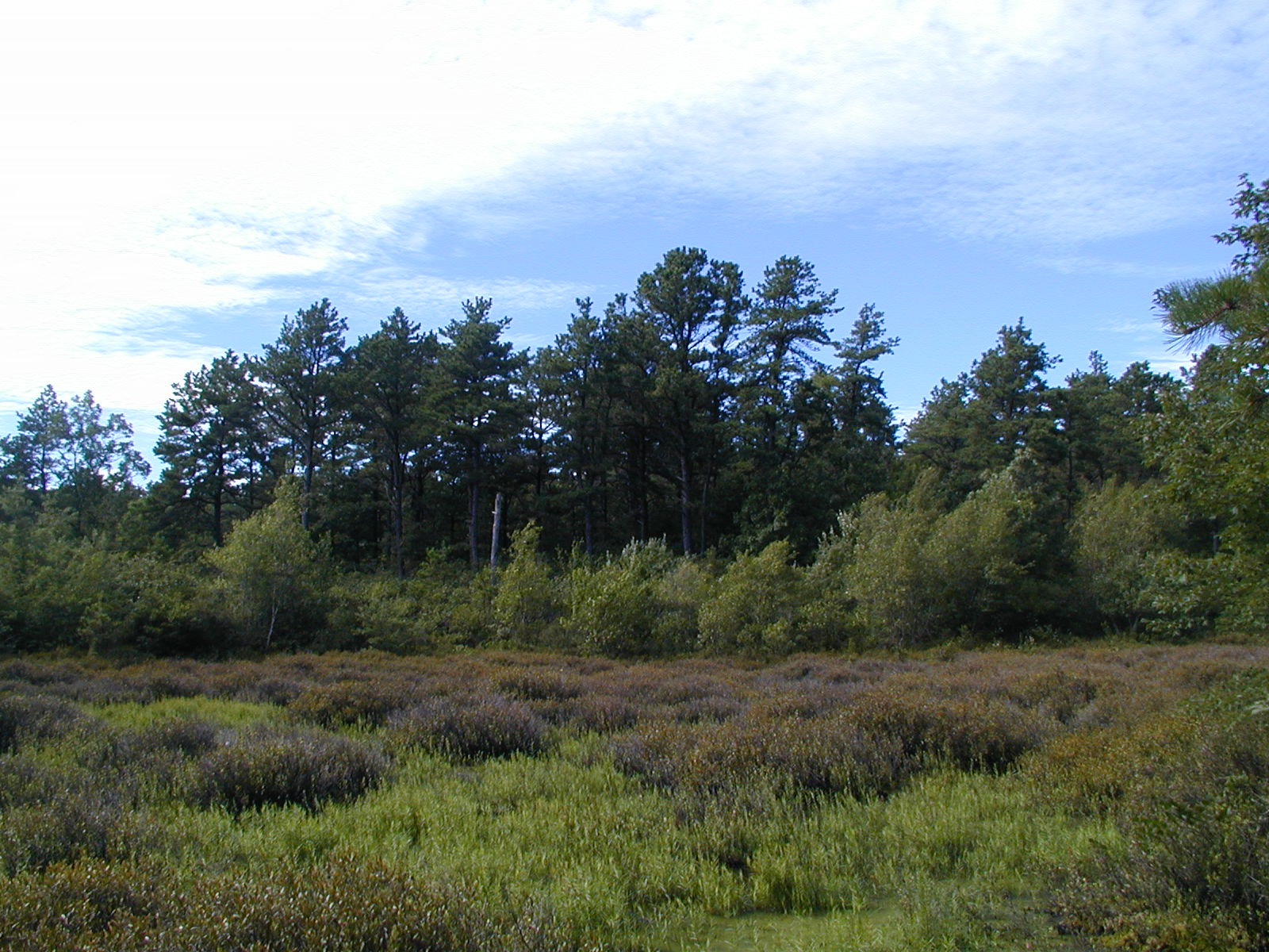 waquoitbayreserve.org