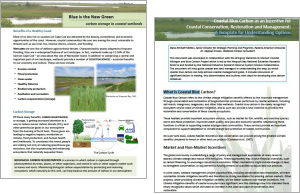 bringing-wetlands-to-market-blue-carbon-template