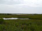 bringing-wetlands-to-market-marsh