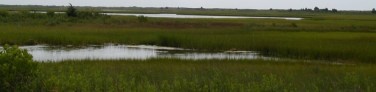 bringing-wetlands-to-market-marsh32
