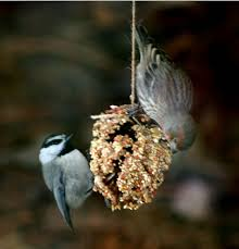pinecodbirdfeeder