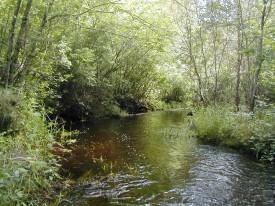 Quashnet River