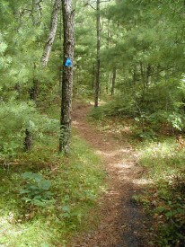 Waquoit Bay Reserve Trails